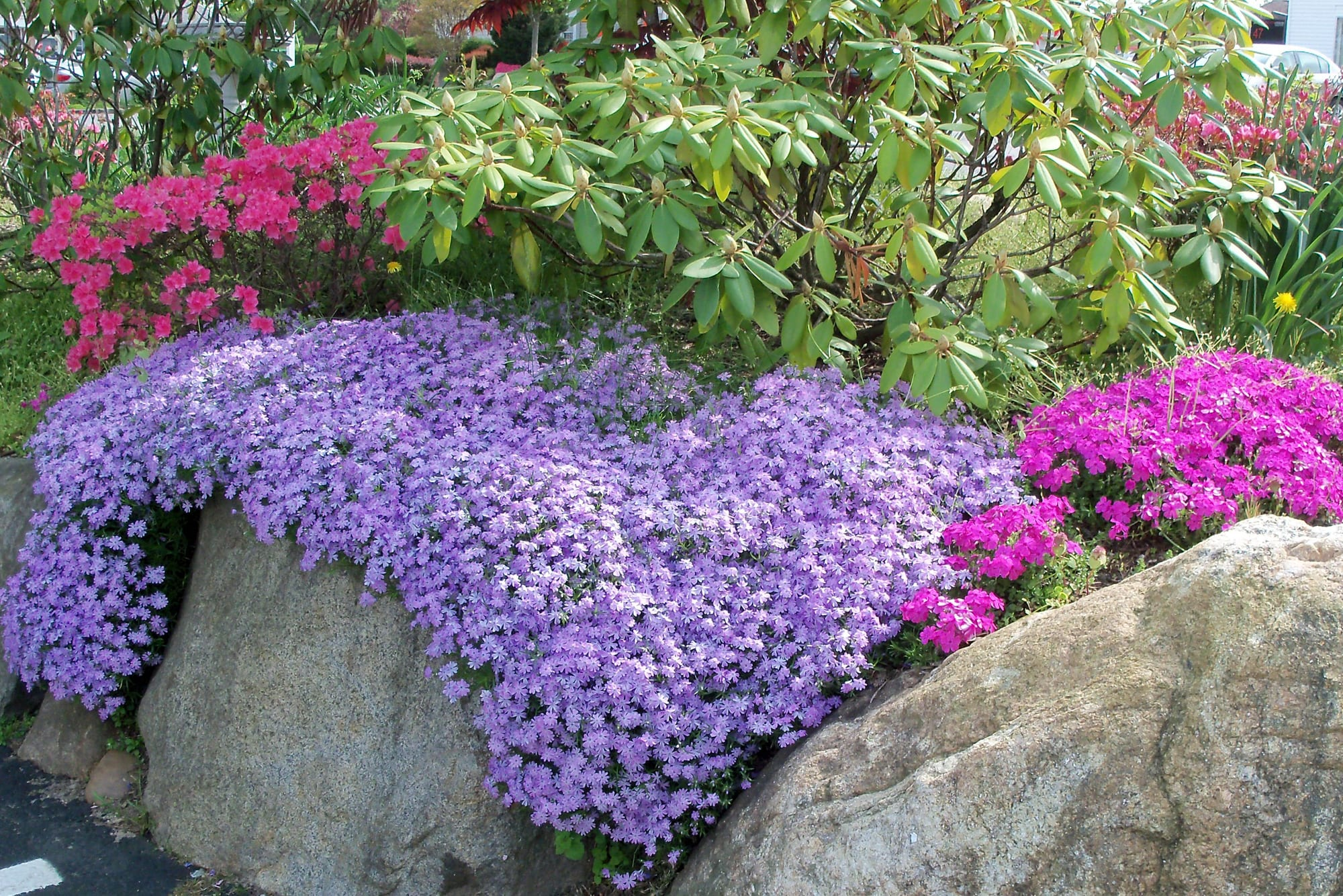 Flower Decor For Home Cover Your Garden With A Blanket Of Phlox Tbr News Media